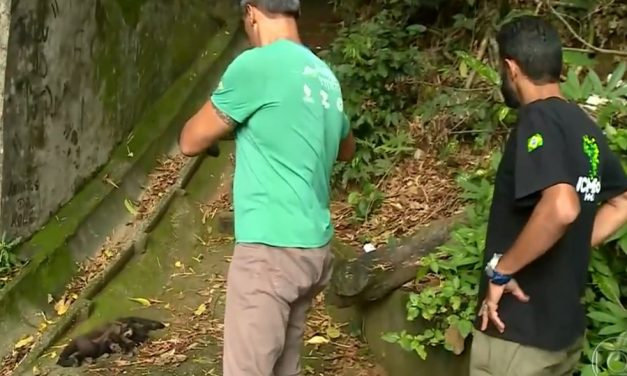 Análise preliminar feita em macacos mortos na Floresta da Tijuca aponta possível envenenamento