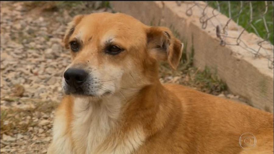 Aumentam os casos de Maus Tratos e Abandono de Animais