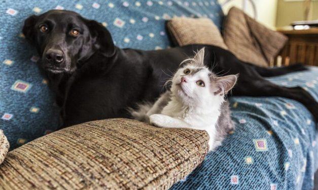 Coronavírus: como cuidar de cachorros e gatos durante isolamento
